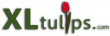 logo XL tulips